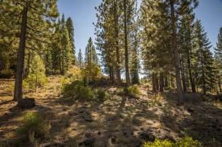 Lahontan Realty – Site 498 – 13204 Snowshoe Thompson