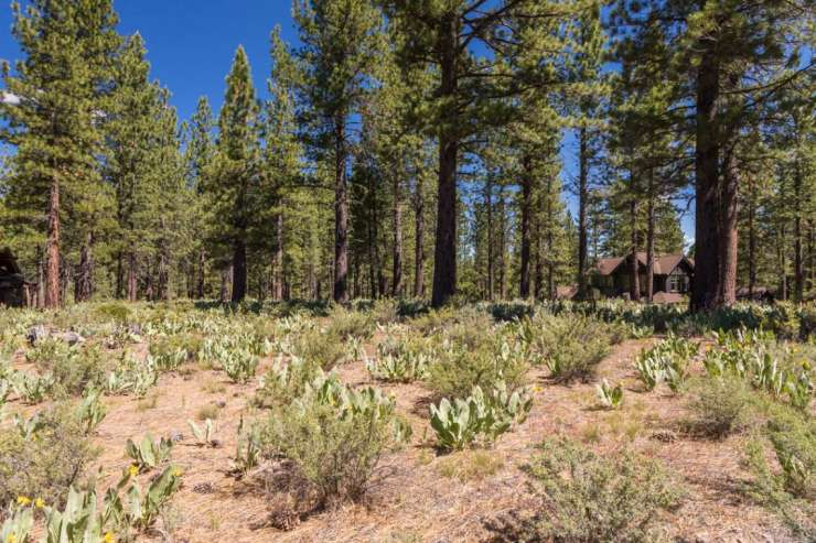 Lahontan Realty – Site 335 – 235 Laura Knight xxx